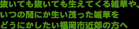 抜いても抜いても生えてくる雑草や、いつの間にか生い茂った雑草をどうにかしたい福岡市近郊の方へ