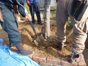 小郡市美鈴が丘 防草工事、植え込み
