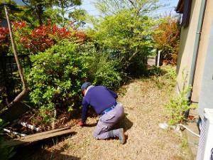 写真:植木回りは人力で草刈り